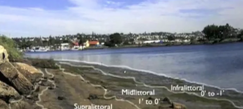 Perspectives of San Diego Bay: Illuminating Standards Video Series